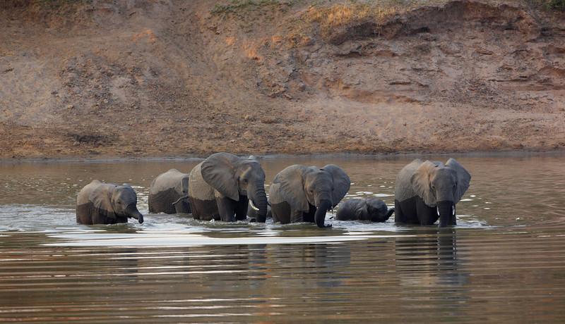 Elephant - 1316.jpg