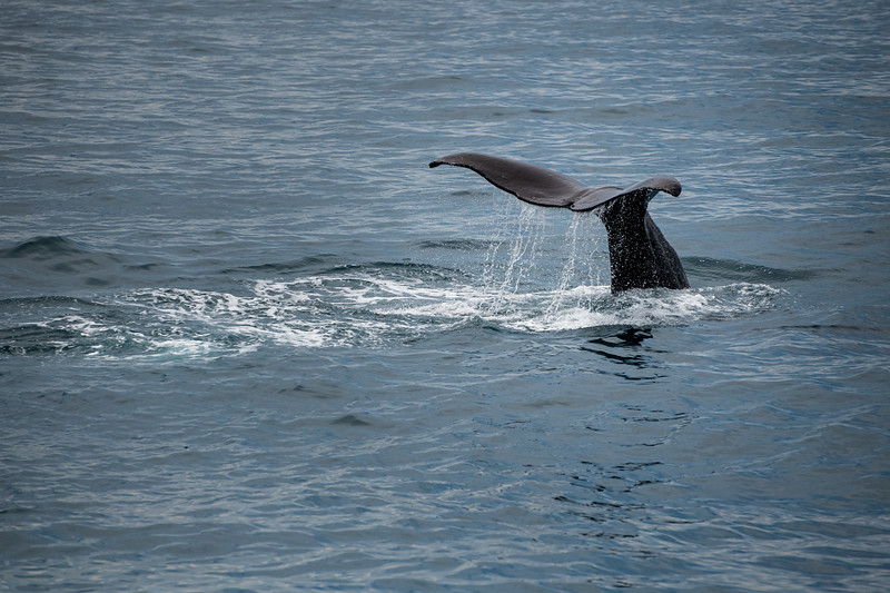 Sperm Whale Watching Kaikoura