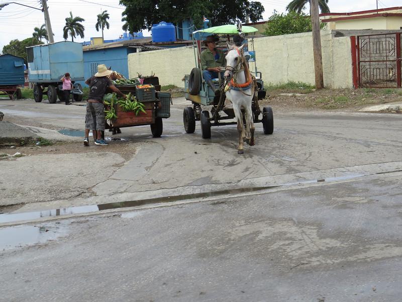 Ciego de Avila's farmers coming to market.