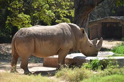 Mysore Zoo - Shri Chamarajendra Zoological Gardens Mysore - Part 2