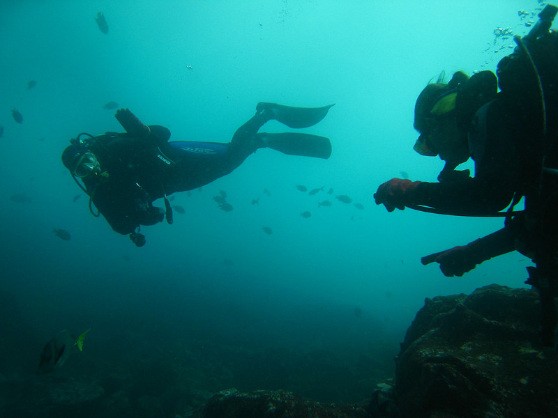 Diving in the Galapagos (350 of 392)