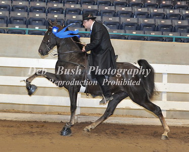 CLASS 9  THREE YR OLD OPEN MARES & GELDINGS  RC