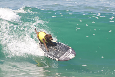 Surf City Dog Surf 2016