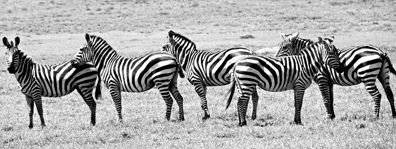 Kenya.Card1.02.2014 325