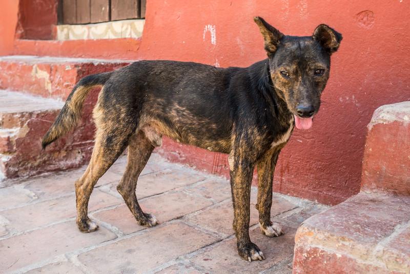 Dog, Trinidad