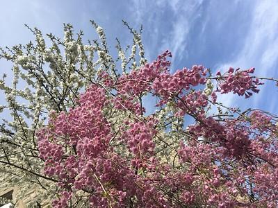 Spring Scenic 2020