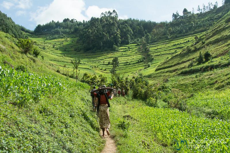 Trekking Through Farm Fields to Find Gorillas - Bwindi National Park, Uganda