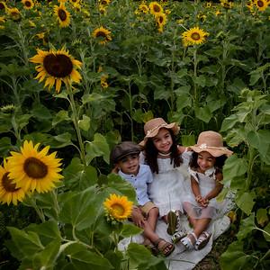 Crider Sunflowers Gallery