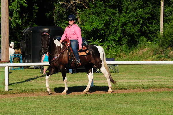 6 - Open Non Gaited Pleasure Walk-Fav Gait