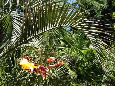 Victoria Exotic Garden - Jeff St. Gelais