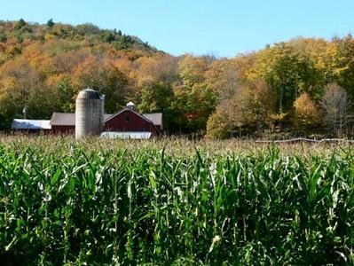 Old Mountain Road Farm