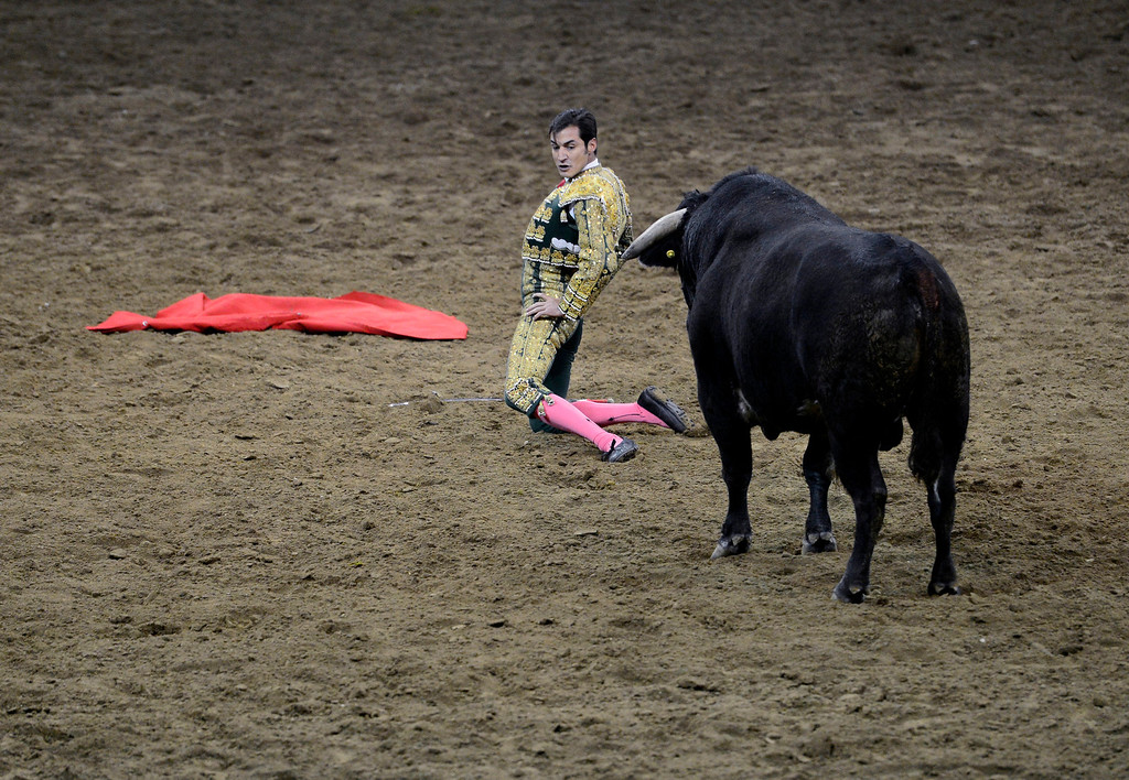. Matador Alfredo Gutierrez kneels and gives his back to the bull during National Western Stock Show\'s Mexican Rodeo Extravaganza at the Denver Coliseum on Sunday, Jan. 13, 2013. AAron Ontiveroz, The Denver Post