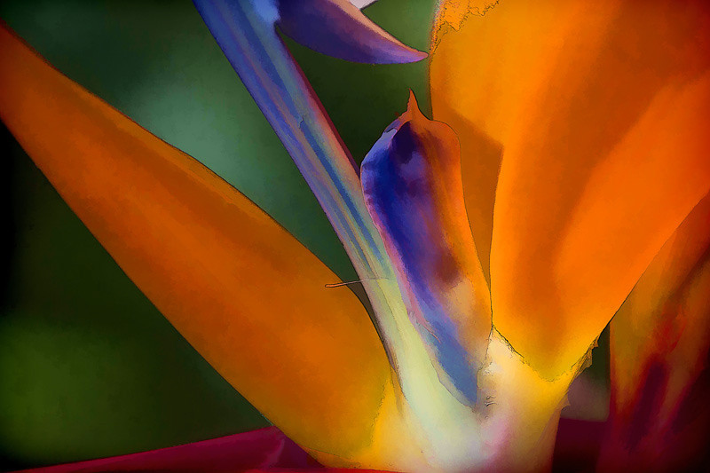 may 14 - Bird of Paradise.jpg