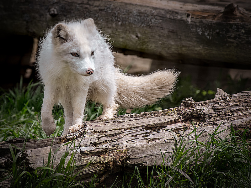 IMGP1564_Animal_0526_19.jpg