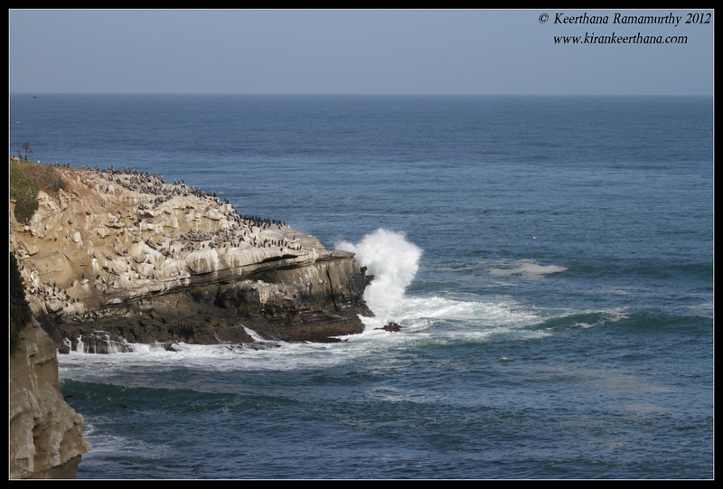 Crashing waves and teeming birdlife, La Jolla Cove, San Diego County, California, April 2012