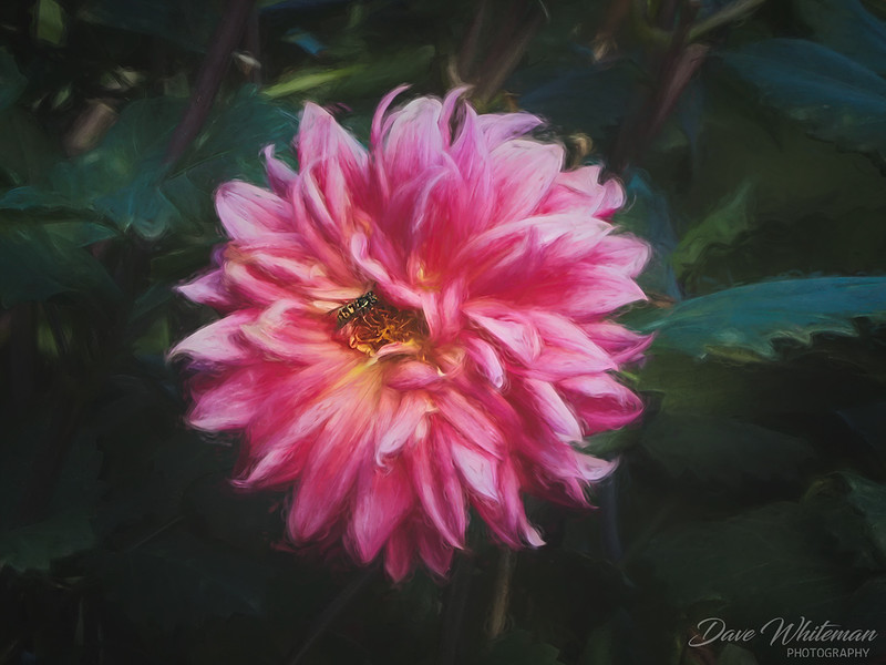 A Bee for Mr Claude