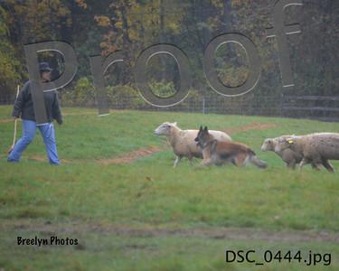 Herding SNH October 6 2013