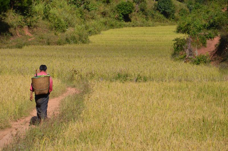 DSC_4212-woker-walking-through-rice-fields.JPG