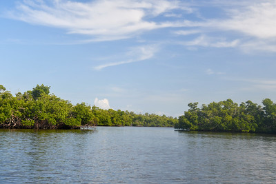 9AM Mangrove Tunnel Kayak Tour - PELICAN MARSH