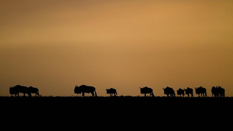 IMG_0671_wildebeest_silhouette.jpg