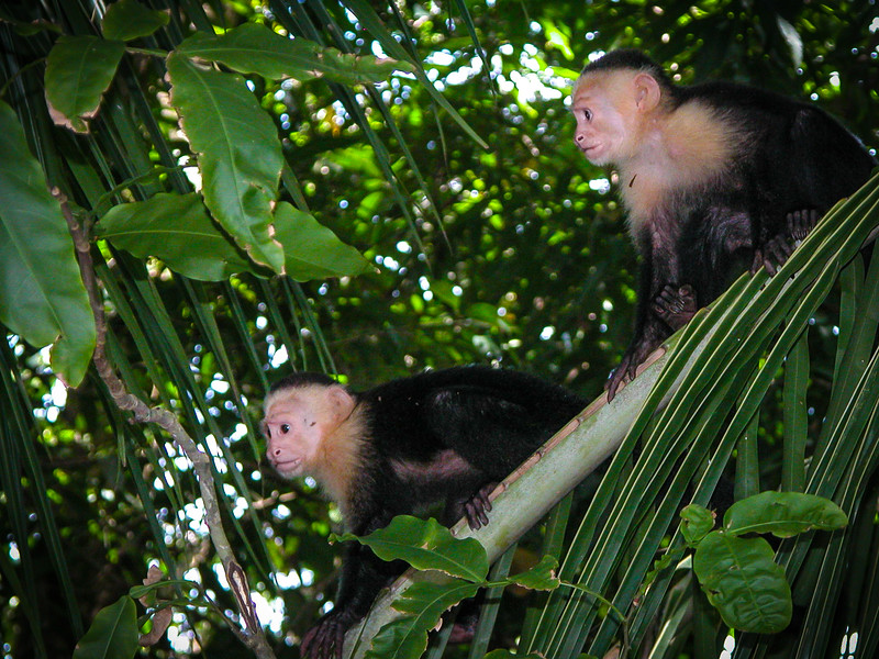326 Olin & Gail Monkey MA.jpg