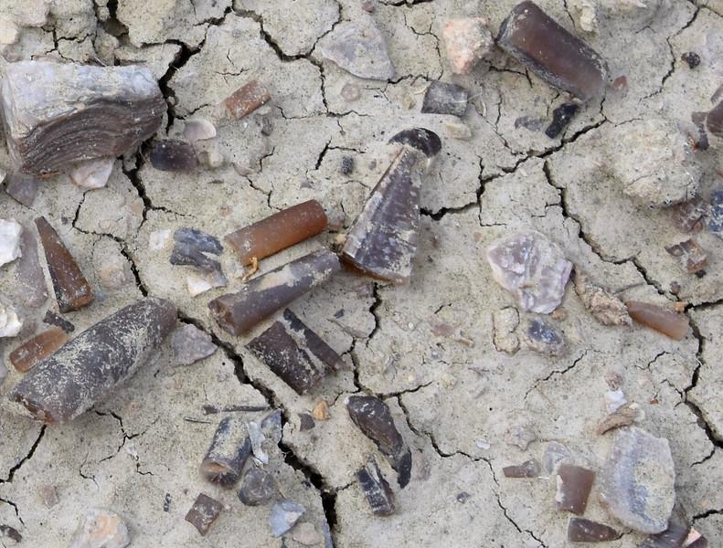 Belamnites-red-gulch-fossil-siteRJDCloseup.jpg