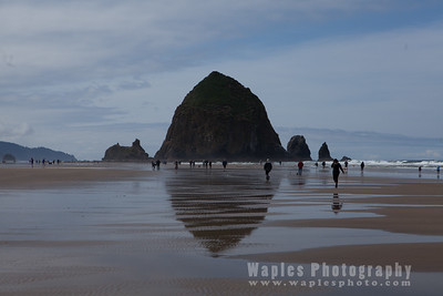 Oregon Coast and Redwood Empire