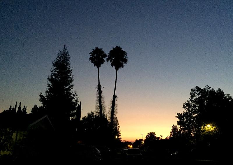 noisy sunset.jpg