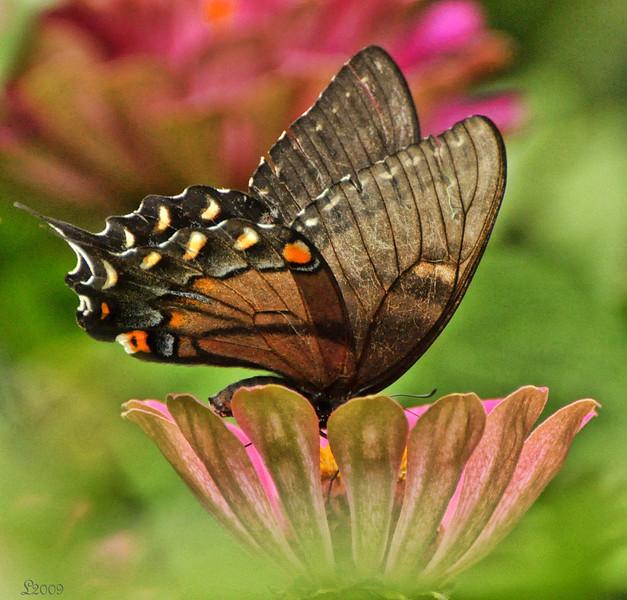 Flickr Natures Pot-Of-Gold Award 11-17-2009.jpg