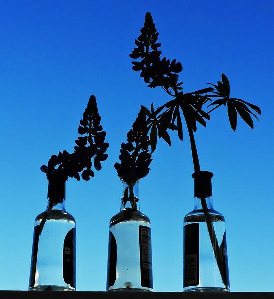bottled lupine