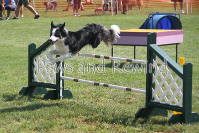 Canine Events 2012
