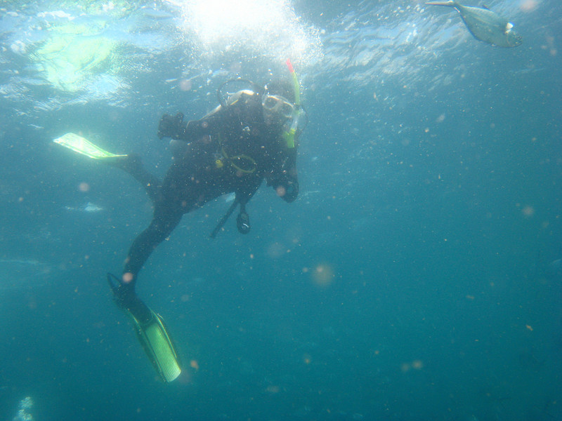 Diving in the Galapagos (204 of 392)