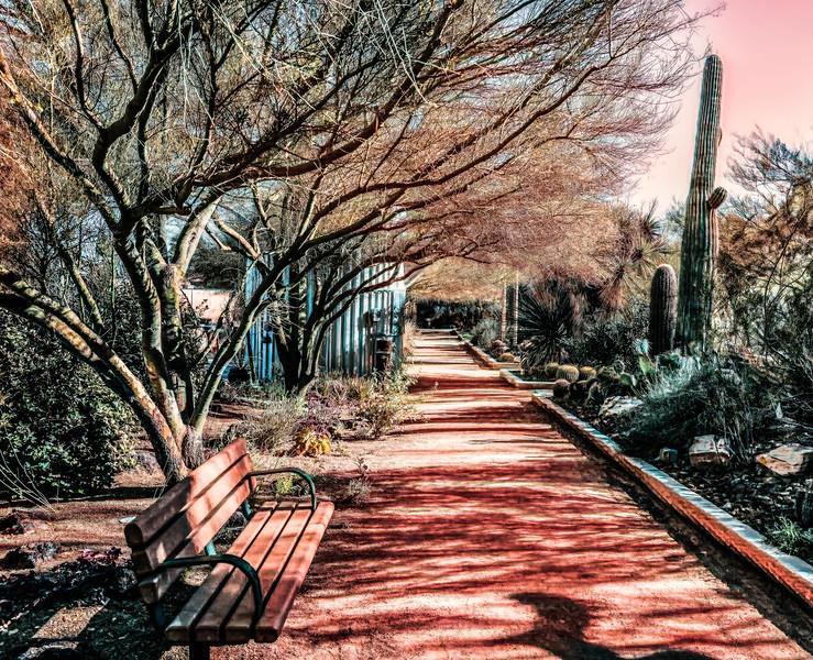 Pathway at Springs Preserve.jpg
