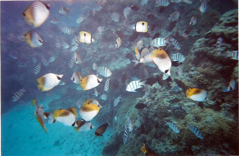 Pretty fishies