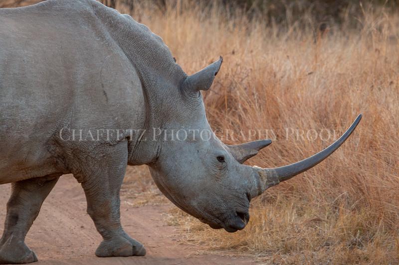 RhinoBig.jpg