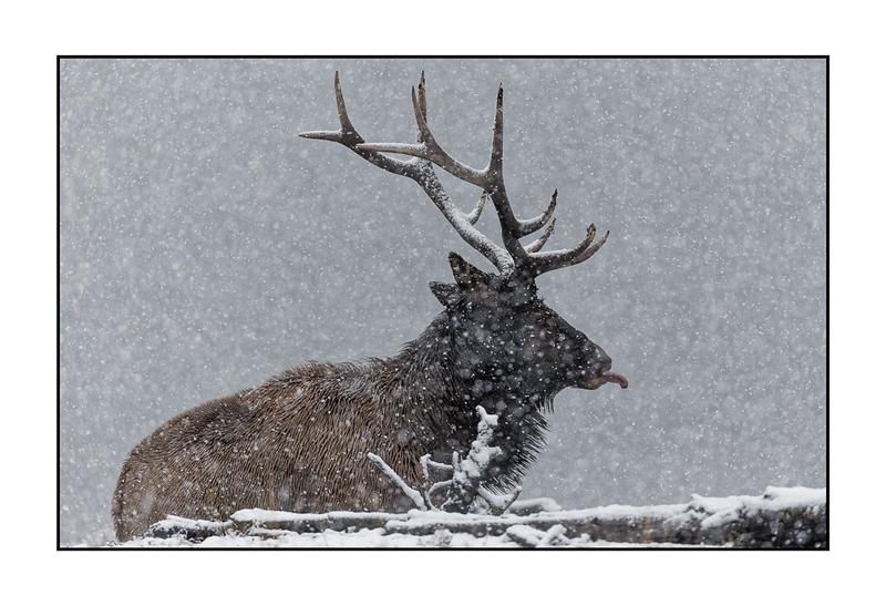 Catching Snowflakes (Print).jpg