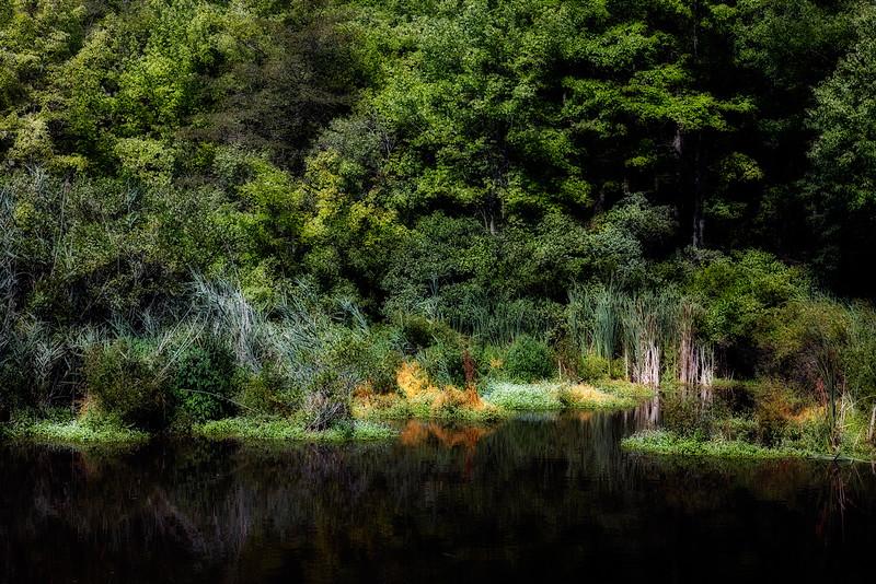 Shu Swamp