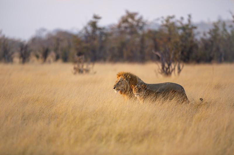 Botswana_0818_PSokol-3773.jpg