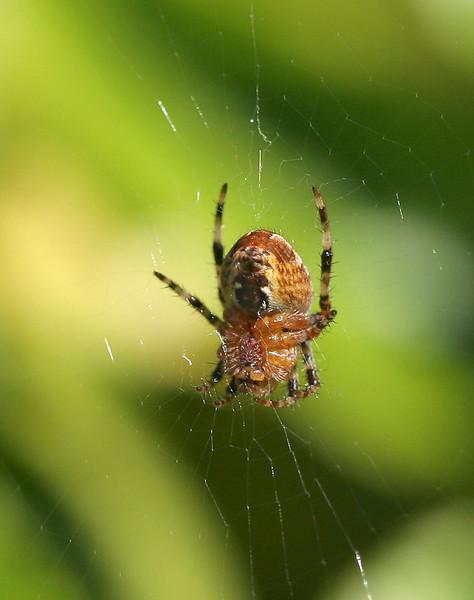 0938 Spider.jpg