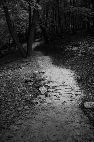 08-04-2020-trail-26.jpg
