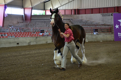 2012 National Clydesdale Show