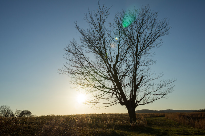 the tree at sunset.jpg