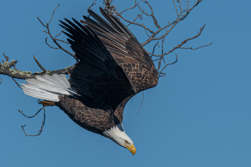 20200207Home Eagles 2-7-20DSC_7806 copy.jpg