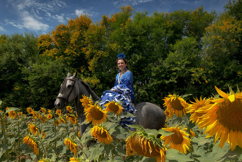A pilgrim dressed in the traditional flamenco dress rides her horse across a field of sunflowers on her way to the town of El Rocio.