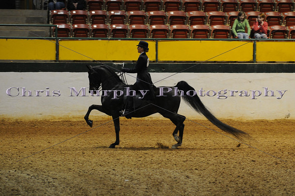 2009 HORSE SHOWS