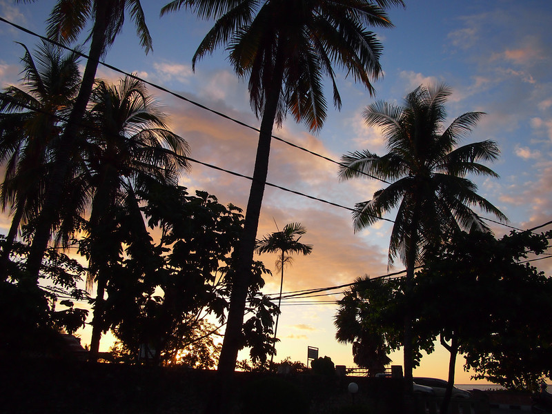 P5228774-sunset-trees.JPG