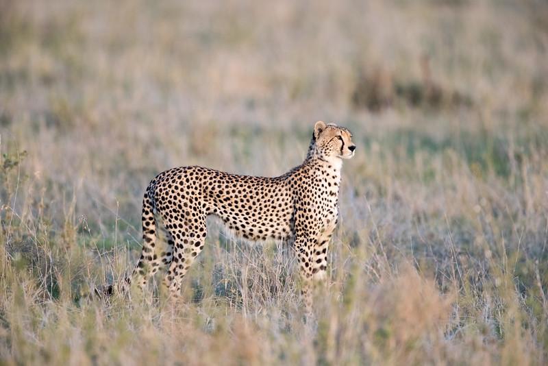 Africa - 101616 - 5871.jpg