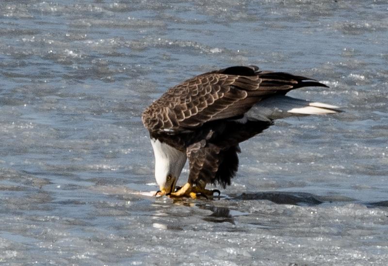 03-17-2020-eagles-5.jpg