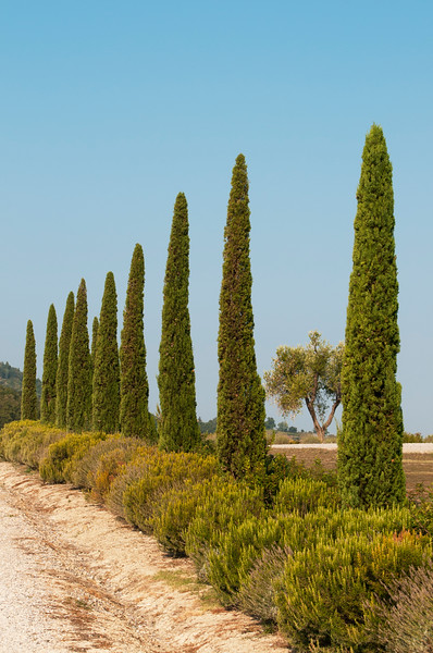 Tuscany Road with Cypress Trees, Italy