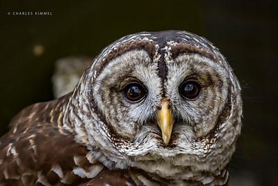 Owl: 2020